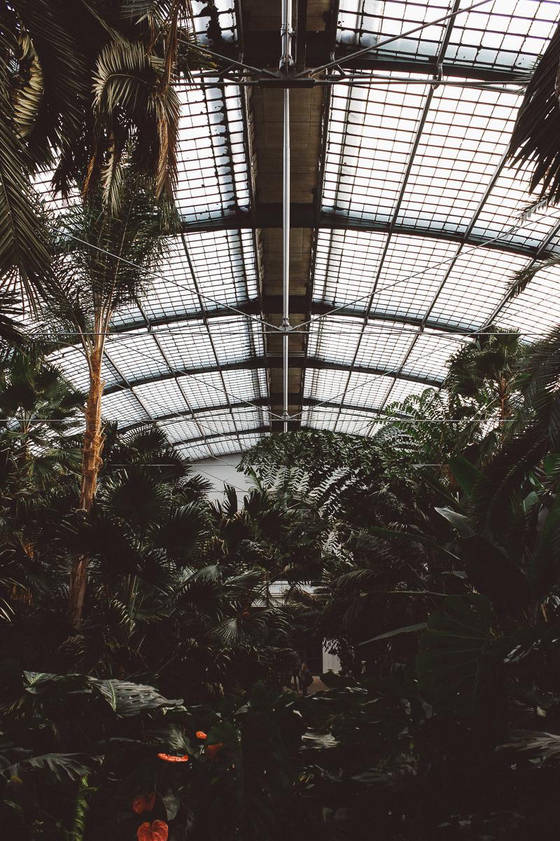 Palmen-Garten-24