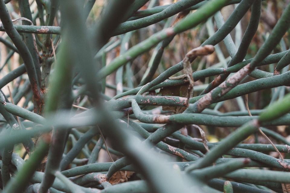 Palmen-Garten-3