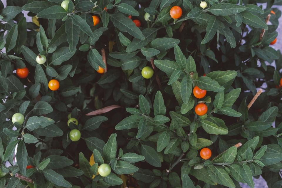 Palmen-Garten-32