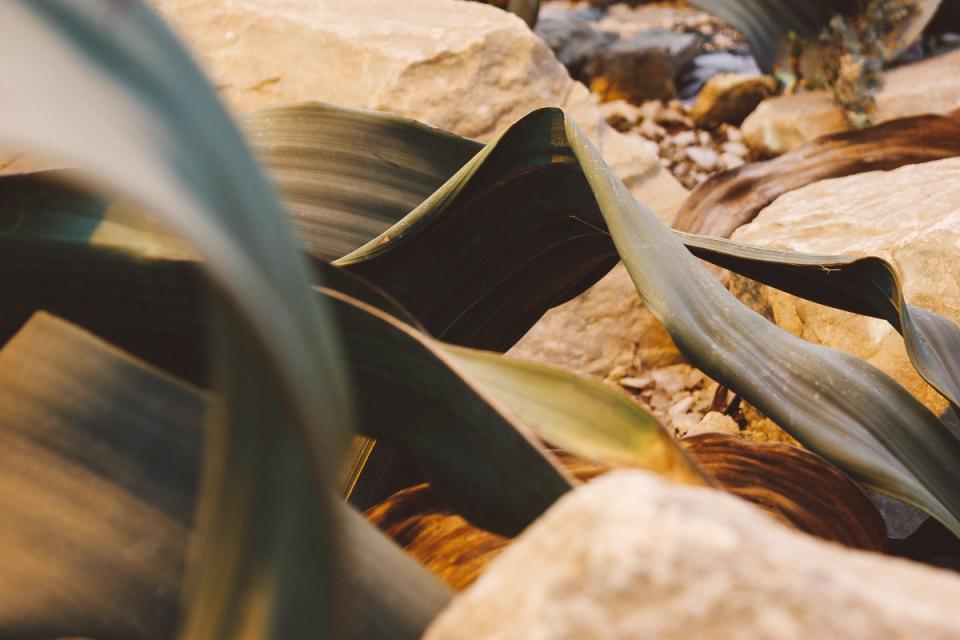 Palmen-Garten-4