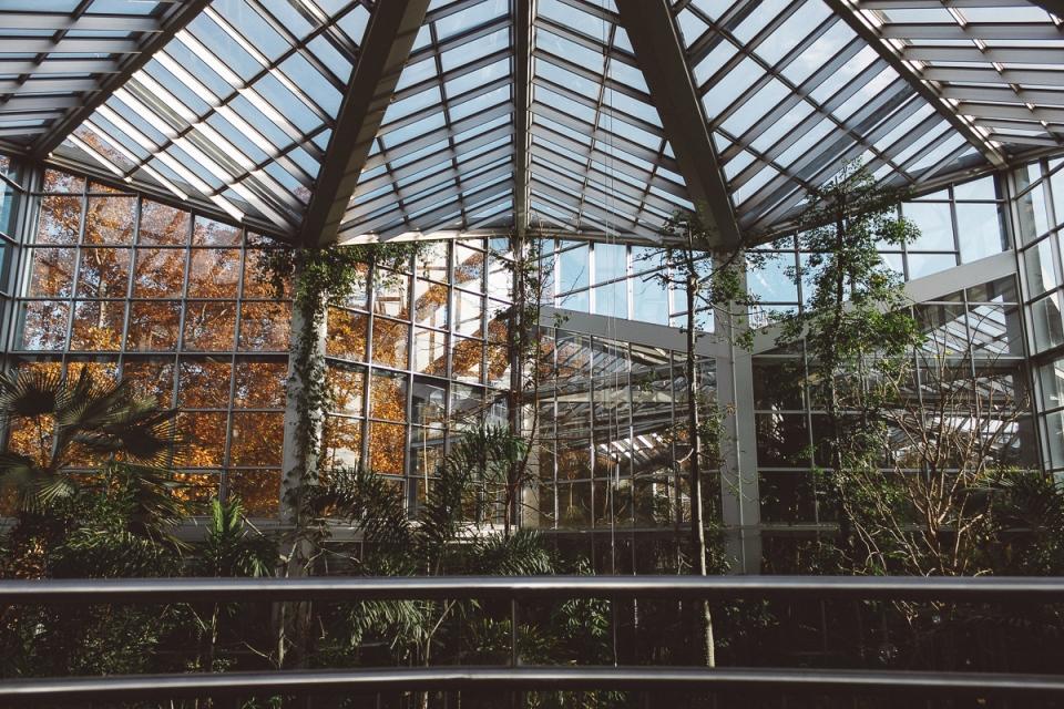 Palmen-Garten-6