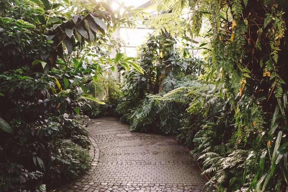 Palmen-Garten-7