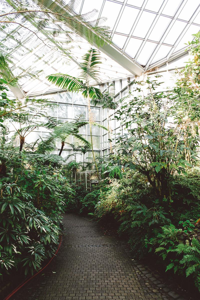 Palmen-Garten-8