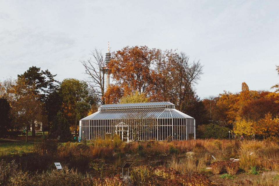 Palmen-Garten-9